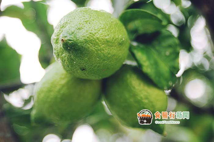 超級好水果檸檬!可排毒、助消化 竟然還能預防這疾病?