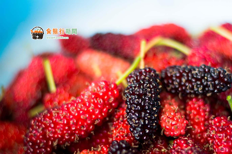 抗老、防癌、養心護肝、降膽固醇的超級果實-桑椹